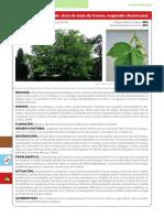 FLORA_TERRESTRE.pdf