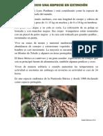 El Lince Ibérico Una Especie en Extinción