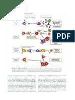 Inmunología celular y molecular(8)
