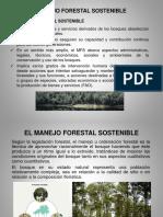 Manejo Forestal y PMF (C-3)