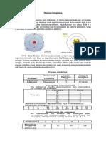 Apostila e Atividade - Química Inorgânica