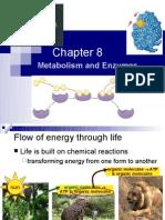 Ch8 Metabolism