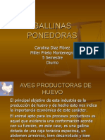 gallinas.ppt