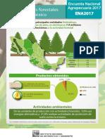 Informe forestal
