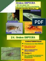 8 Sistematica - Diptera