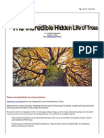The Incredible Hidden Life of Trees