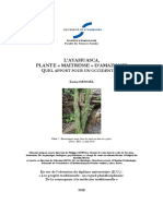 memoire-ayahuasca.pdf
