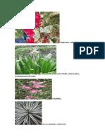 Flora y fauna .docx