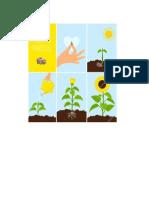 Proceso de Siembra de Una Planta