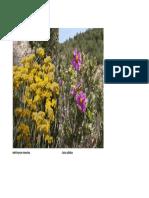 Flora Plantas