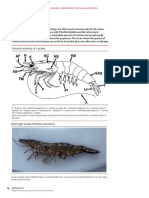 Crustacean identification study chart