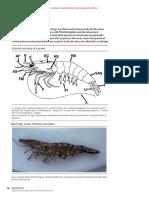 Crustacean identification study chart