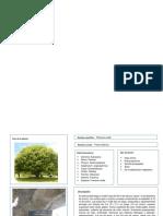 funciones arquitectonicas, esteticas y ecologicas de las plantas