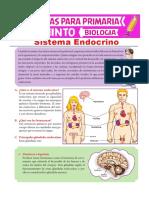 Sistema-Endocrino-para-Quinto-de-Primaria.pdf