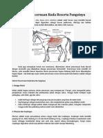 Sistem Pencernaan Kuda Beserta Fungsinya – Berbagi Ilmu Pengetahuan.docx