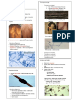 Micro112 Superficial and Cutaneous Mycoses