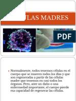 Celulas Madres