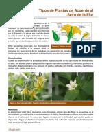 08. Plantas Hermafroditas Monoicas y Dioicas