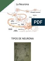 Tej. Nervioso Clase Neuronas y Glias