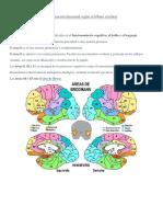 Localización Funcional Según El Lóbulo Cerebral