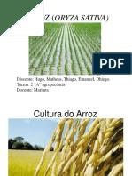 Cultura do arroz