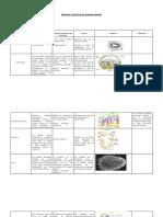 estructurayfuncindelosorganeloscelulares-120511170601-phpapp01.docx
