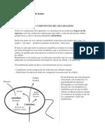 Introduccion Al Metabolismo Tema 11 Dra Maldonado