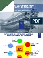 EfectoDeLaLLuviaSobreCultivoCamaron.pdf