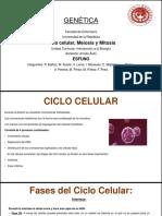 Ciclo Celular, Mitosis y Meiosis