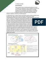 Tema 7 Corteza Cerebral Neurotransmisores