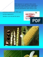 GMO PPT