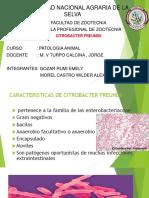 citrobacter freundii (PATOLOGIA ANIMAL)