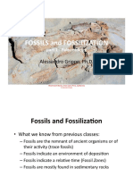 Fossils_2