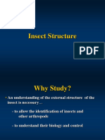 Insect Structure