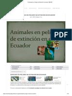 10 Animales en Peligro de Extinción en Ecuador【2019】