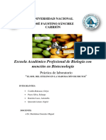 INFORME FINAL MADURACION DE FRUTOS CLIMATERICOS Y NO CLIMATERICOS CON INFLUENCIA DEL ETILENO (ETRHEL).docx
