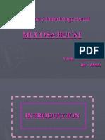 Mucosa  Bucal