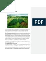 Contaminación del suelo (2).docx