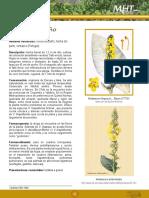 Hierba del paño.pdf