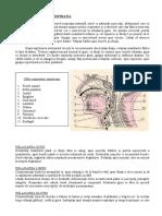 YN -  DETALII-2 Relaxare gura,  respiratie etc.doc