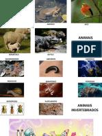 Pranchas Com Imagens