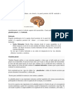 Diencefalo, Anatomia de Rouviere
