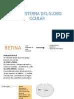 Capa Interna Del Globo Ocular -Anatomia Semana 4