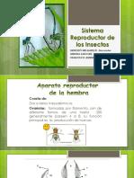 Sistema Reproductor de Los Insectos