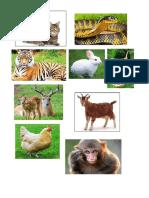 Animals Pictures