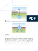 Receptores nucleares.docx