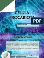CELULA-PROCARITOA.pptx