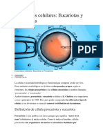 Célula Eucariota Y PRO
