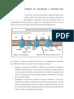 CADENA DE TRANSPORTE DE ELECTRONES Y FOSFORILACIÓN OXIDATIVA.docx