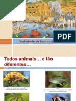 formas dos animais.pdf